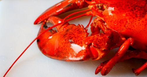 lagosta-cardeal